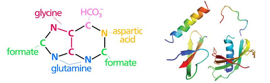 imuregen ingredients - nucleotides