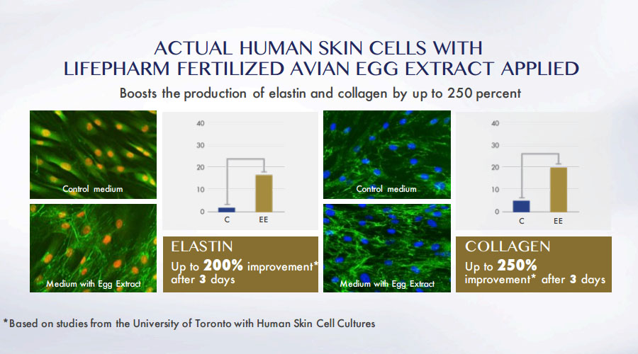 clinical study elastin collagen